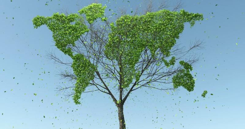 Baum, aus dem eine Welt entspringt