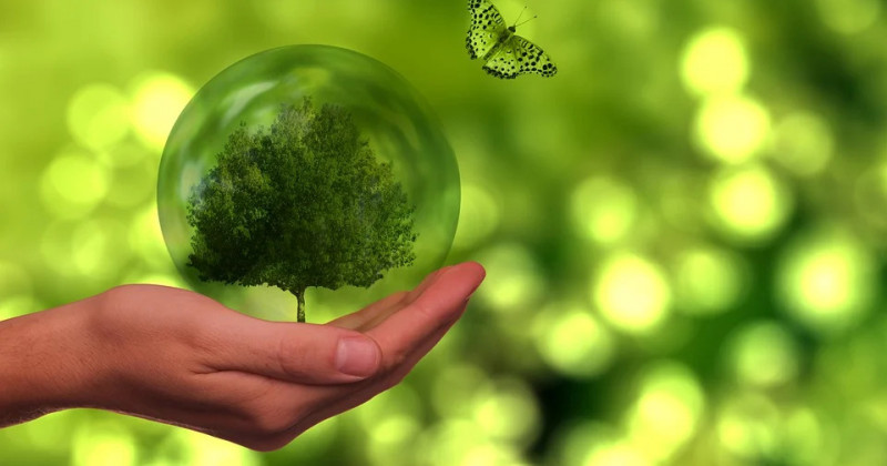 Baum, Schmetterling, Globus