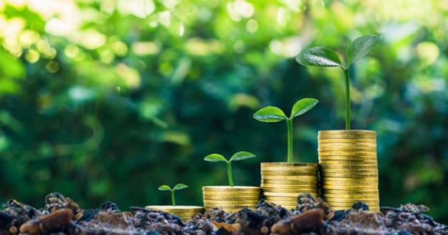 Geld gepflanzt wächst