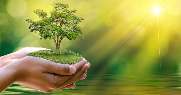 Zwei Hände bieten ein Stück Land an, auf dem ein Baum wächst
