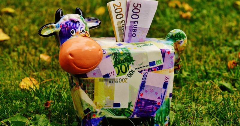 Kuh aus Euro